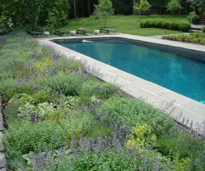 thumbs_perennial-beds-photo-1